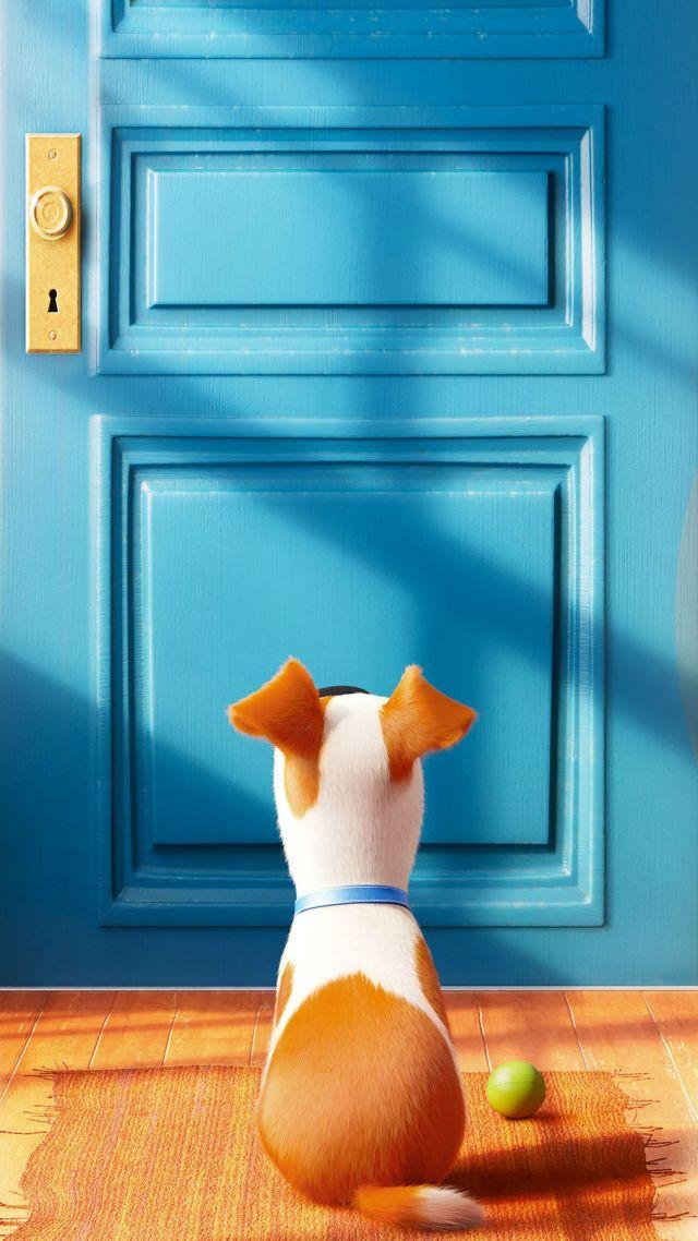 Cartoon Cute Dog Wallpaper Iphone Great Dog Beds