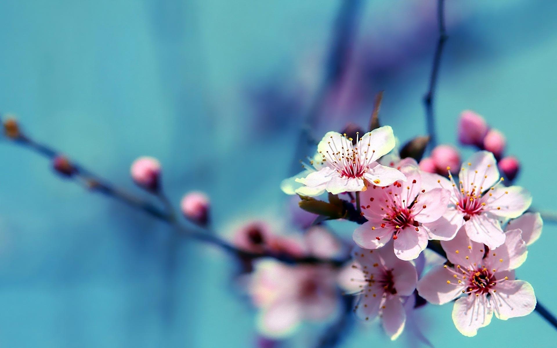 Download Flower Laptop Wallpaper, HD Backgrounds Download