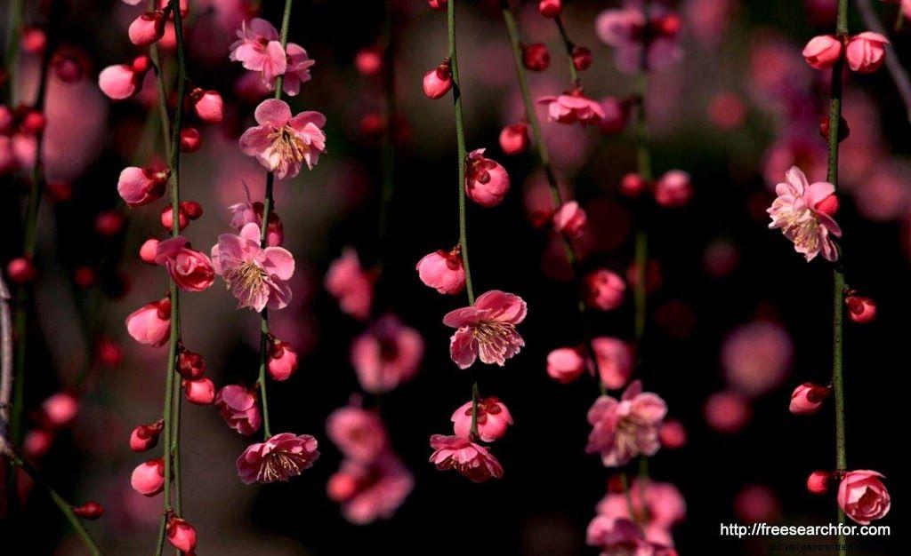 Download Flower Laptop Wallpaper Hd Backgrounds Download