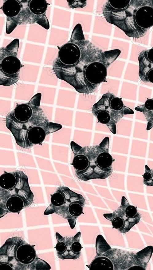 Download Aesthetic Cat Wallpaper Hd Backgrounds Download