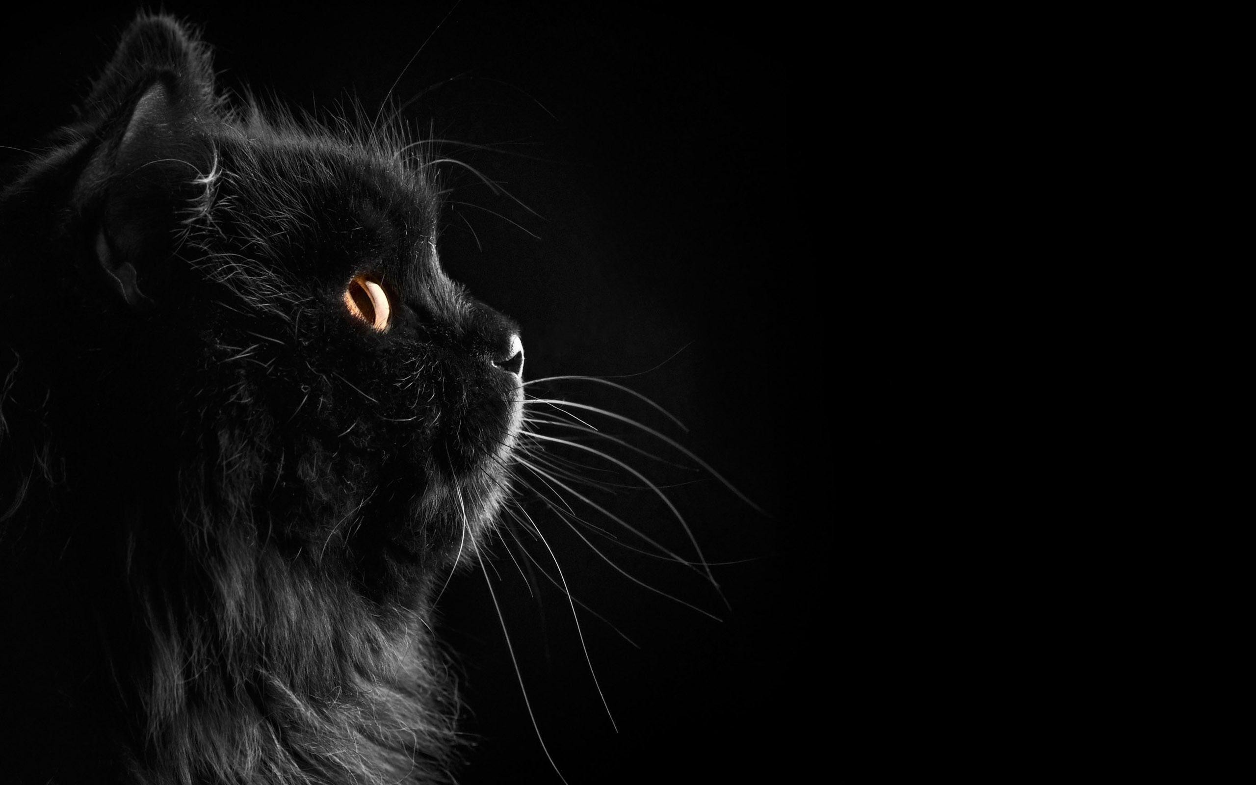 130022 abstract cat wallpaper