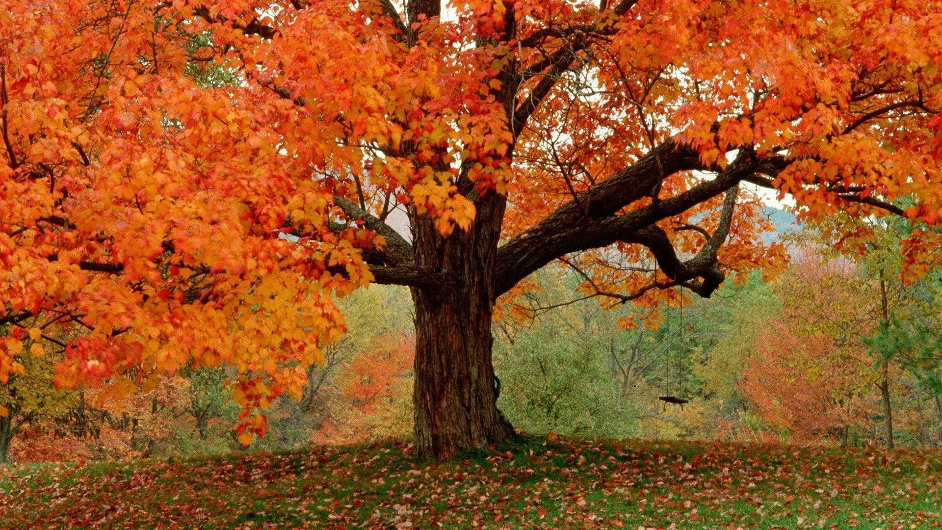 Download Autumn Wallpaper Widescreen Hd Backgrounds Download Itl Cat