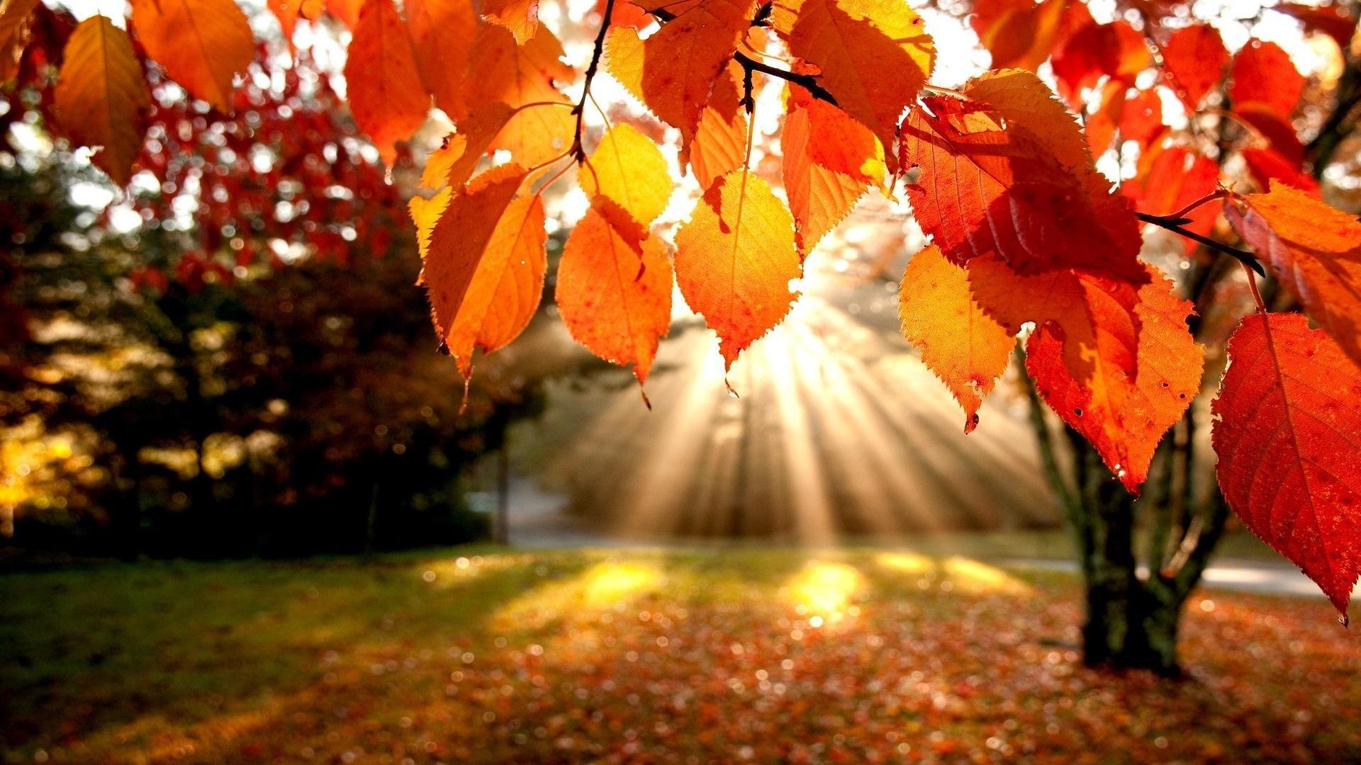 Download Autumn Wallpaper Widescreen Hd Backgrounds