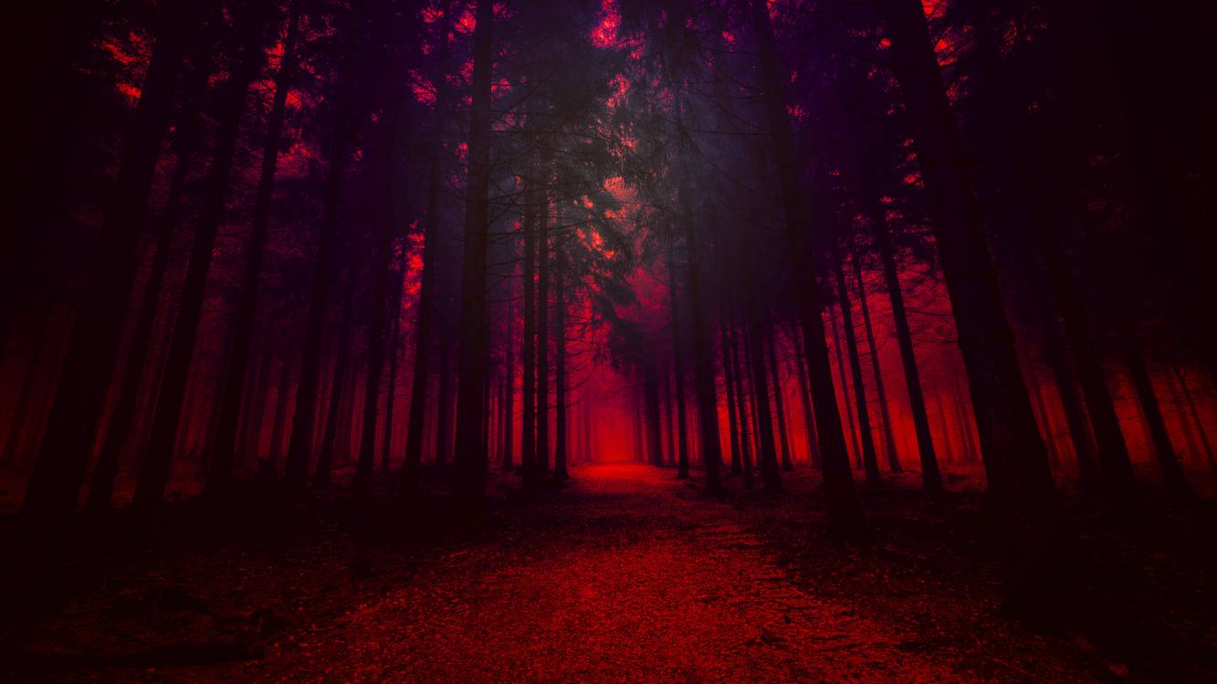 Download Forest At Night Wallpaper Hd Backgrounds Download