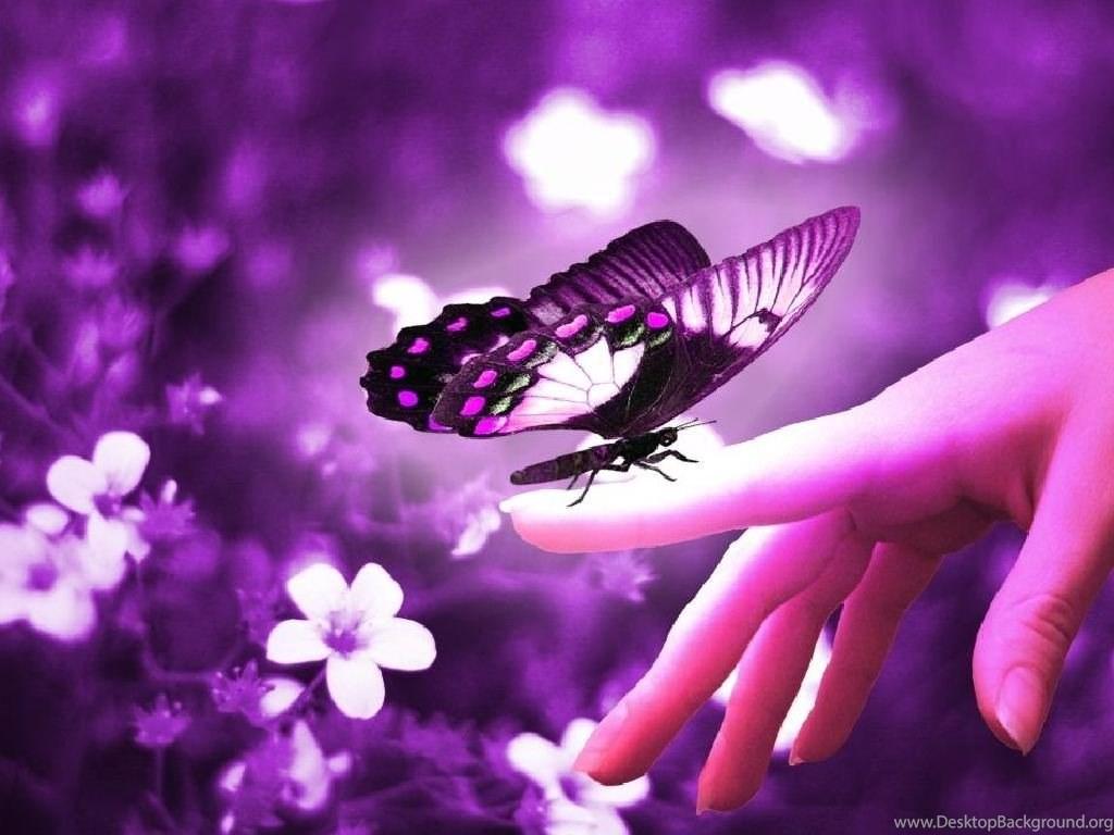 Download Purple Cute Wallpaper Hd Backgrounds Download