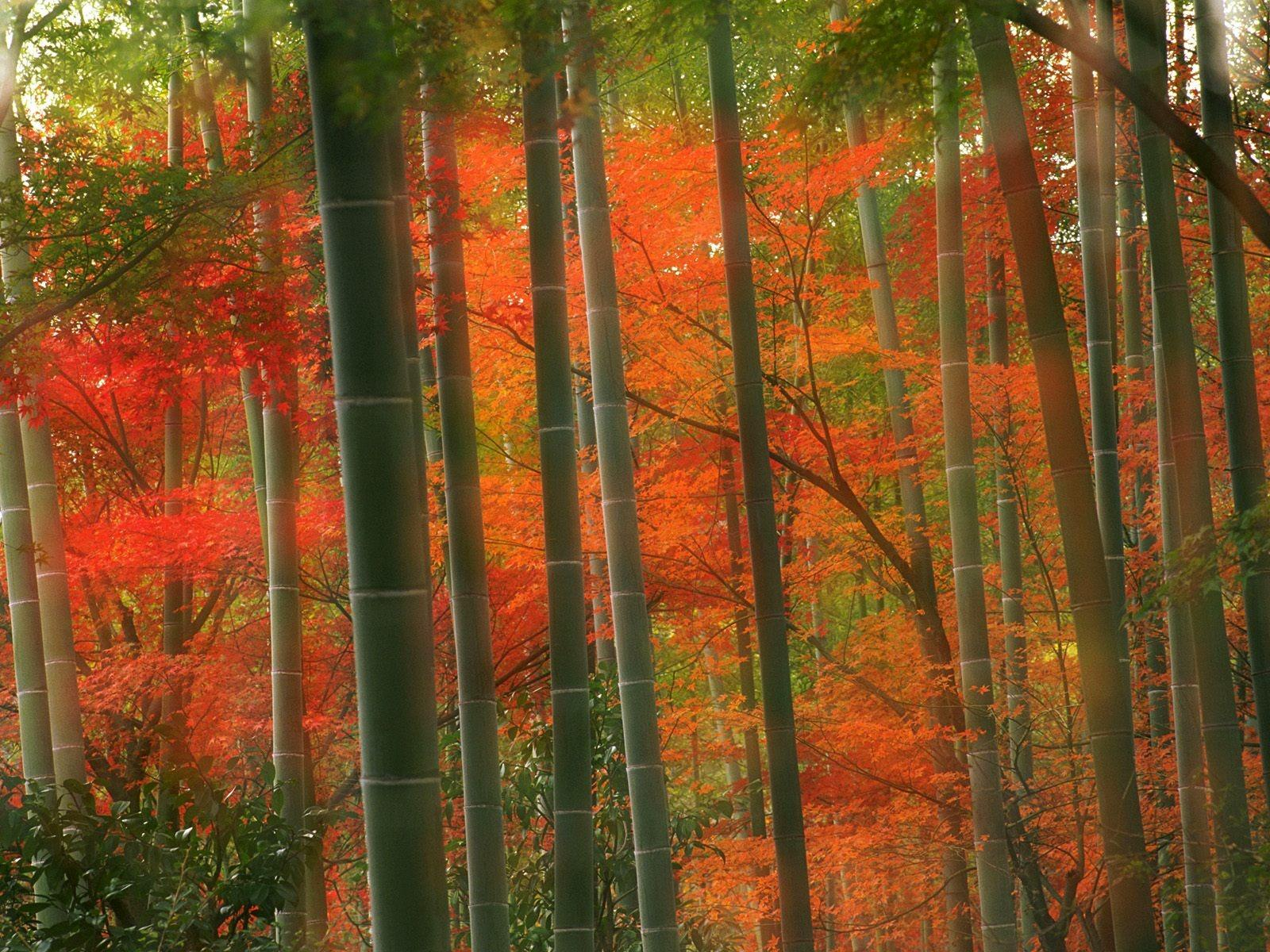 Download Japanese Forest Wallpaper Hd Backgrounds Download