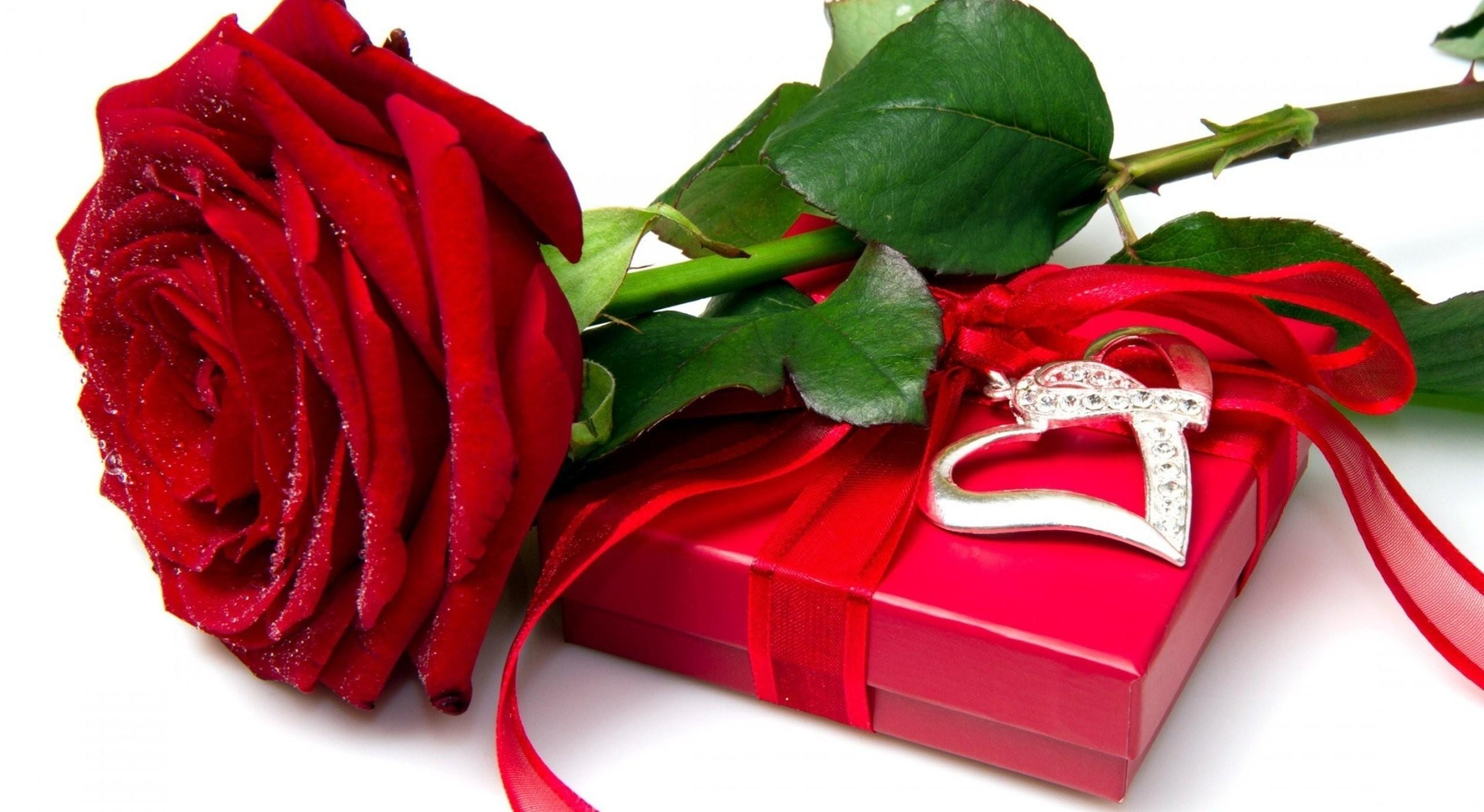 Download Flower Wallpaper Rose Love Hd Backgrounds Download