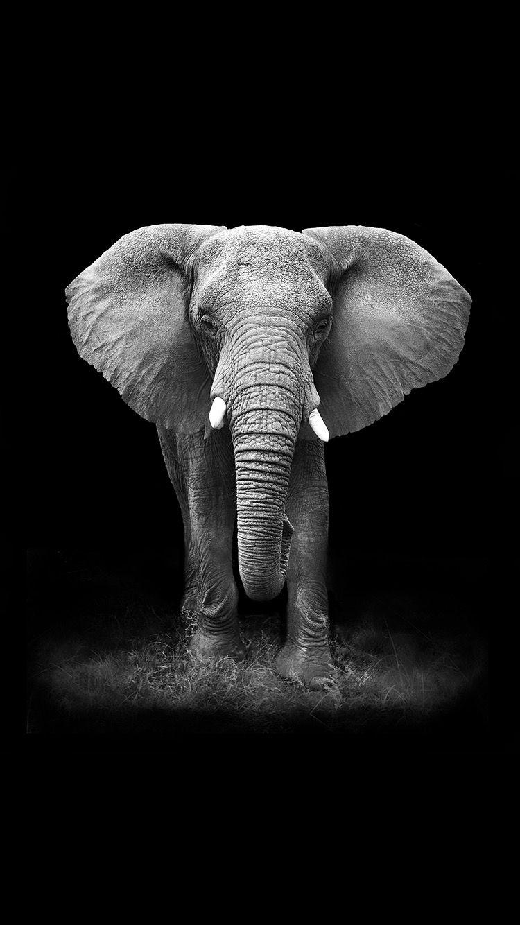Download Elephant Wallpaper HD Backgrounds Download Itlt