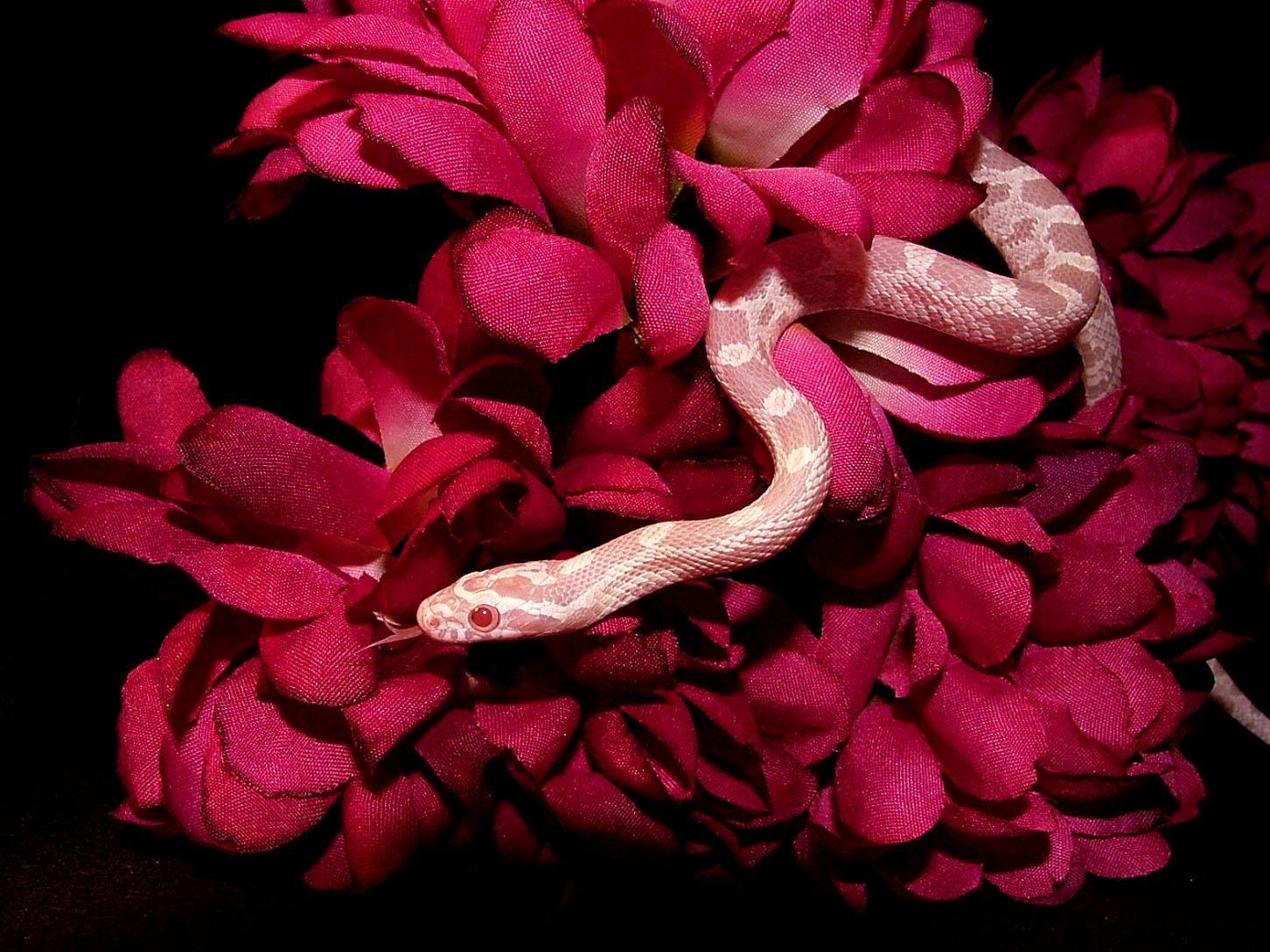 Download Snake Wallpaper Hd Backgrounds Download Itl Cat
