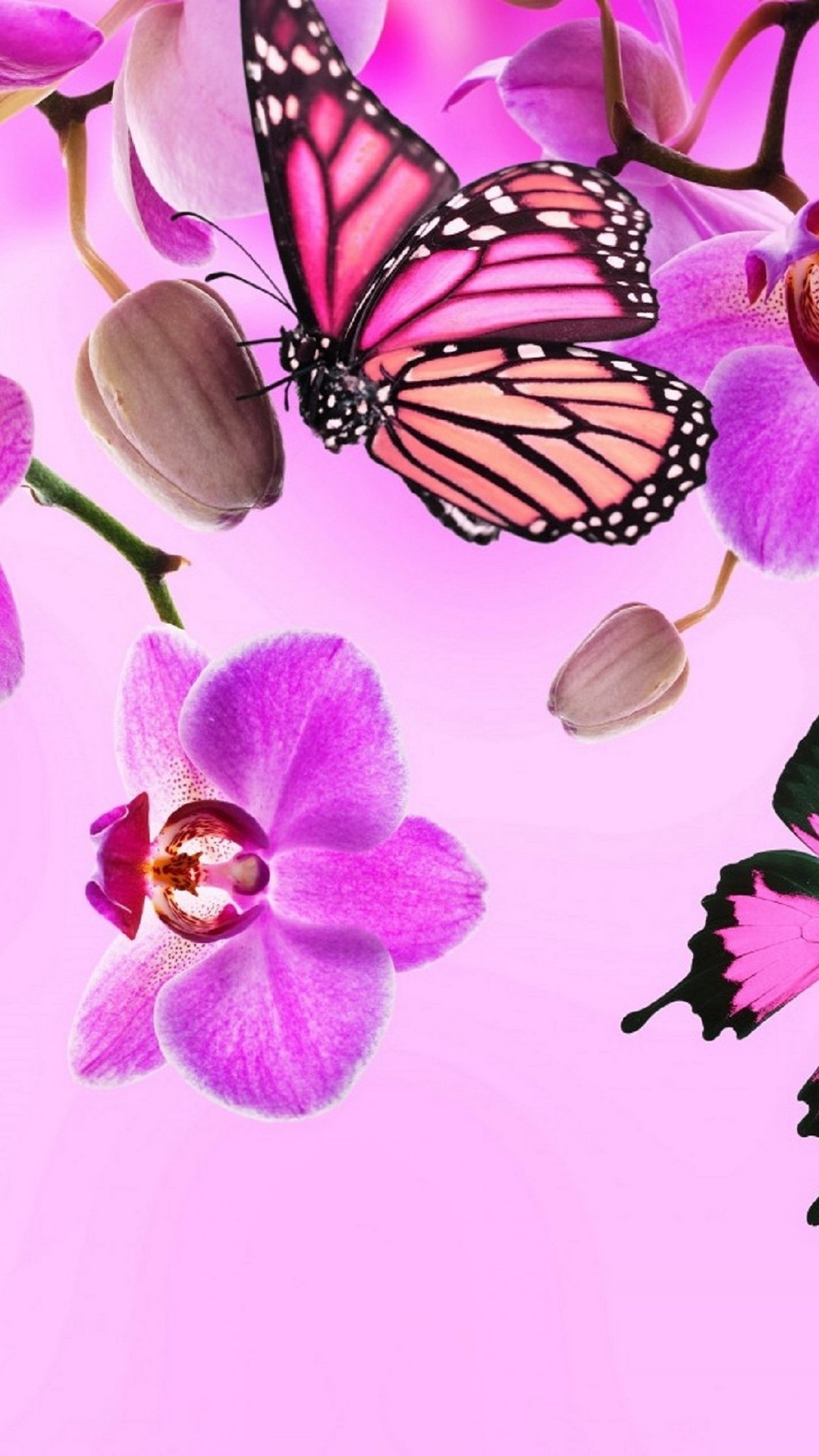 Download Pink Butterflies Wallpaper Hd Backgrounds Download