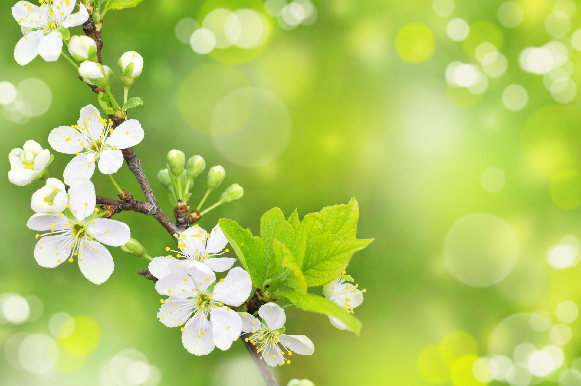 Download Free Spring Wallpaper Hd Backgrounds Download