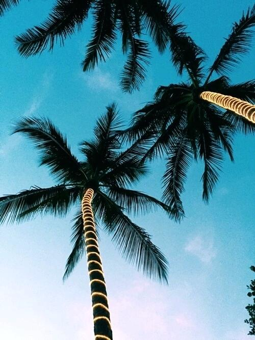 Download Palm Trees Wallpaper Hd Backgrounds Download Itl Cat
