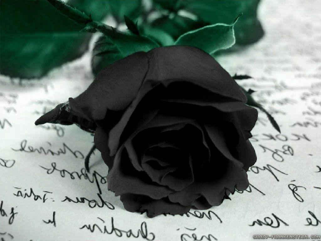330866 black rose wallpaper