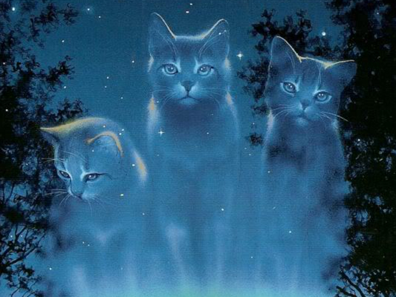 Download Warrior Cats Wallpaper Hd Backgrounds Download