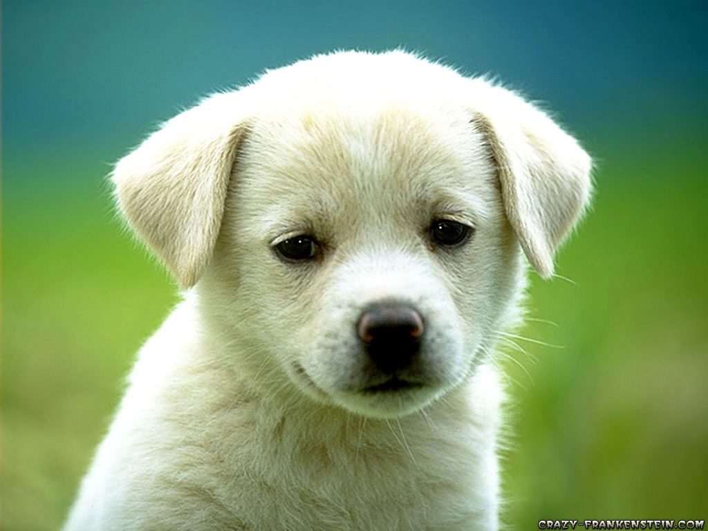 Download Dog Wallpapers Hd Backgrounds Download Itlcat
