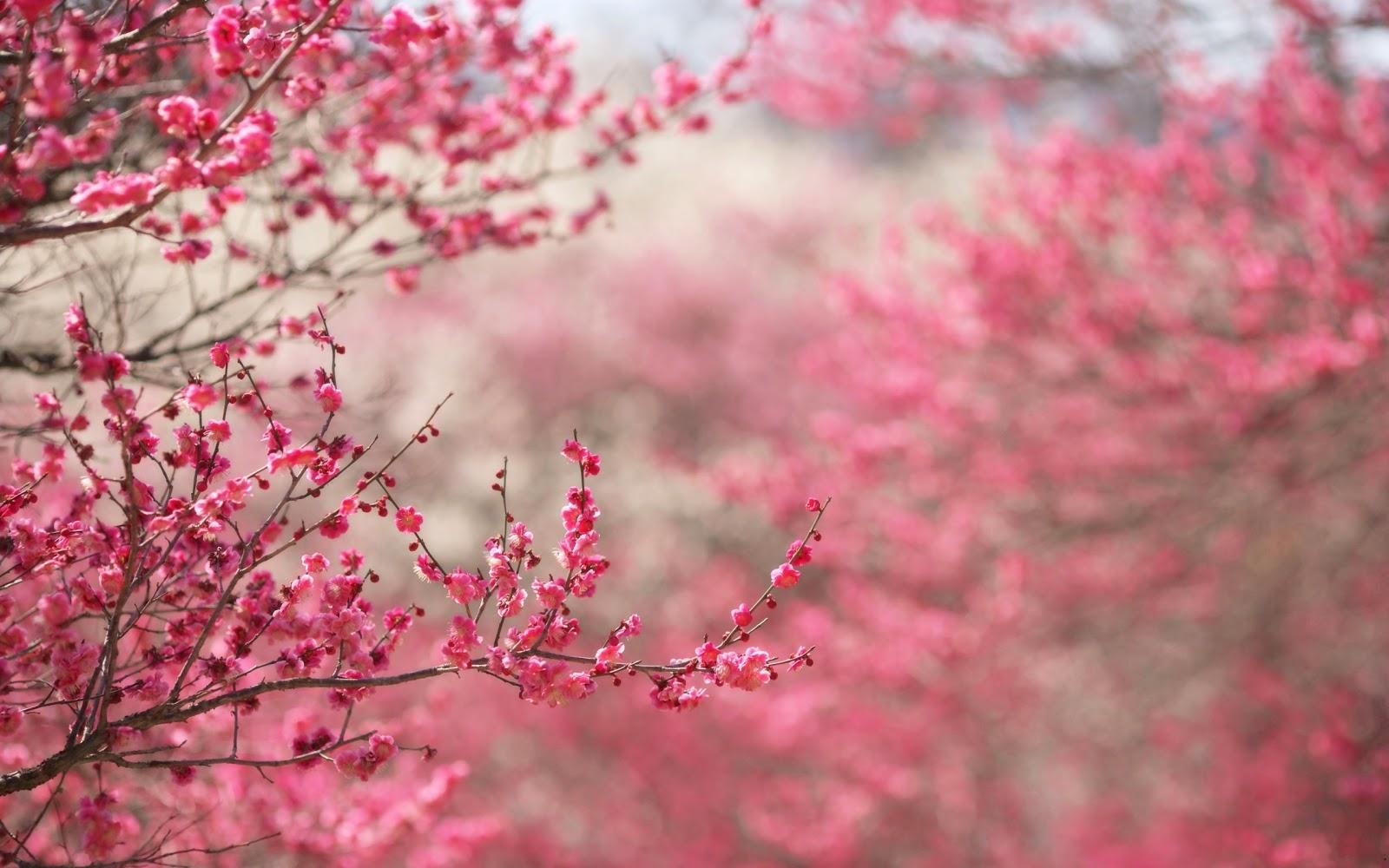 Download Japanese Flower Wallpaper Hd Backgrounds Download