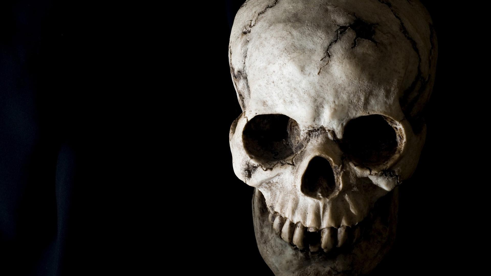 Download Skeleton Wallpaper Hd Hd Backgrounds Download