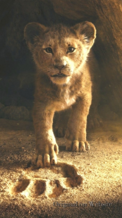 Lion King Wallpaper Find And Download Best Wallpaper