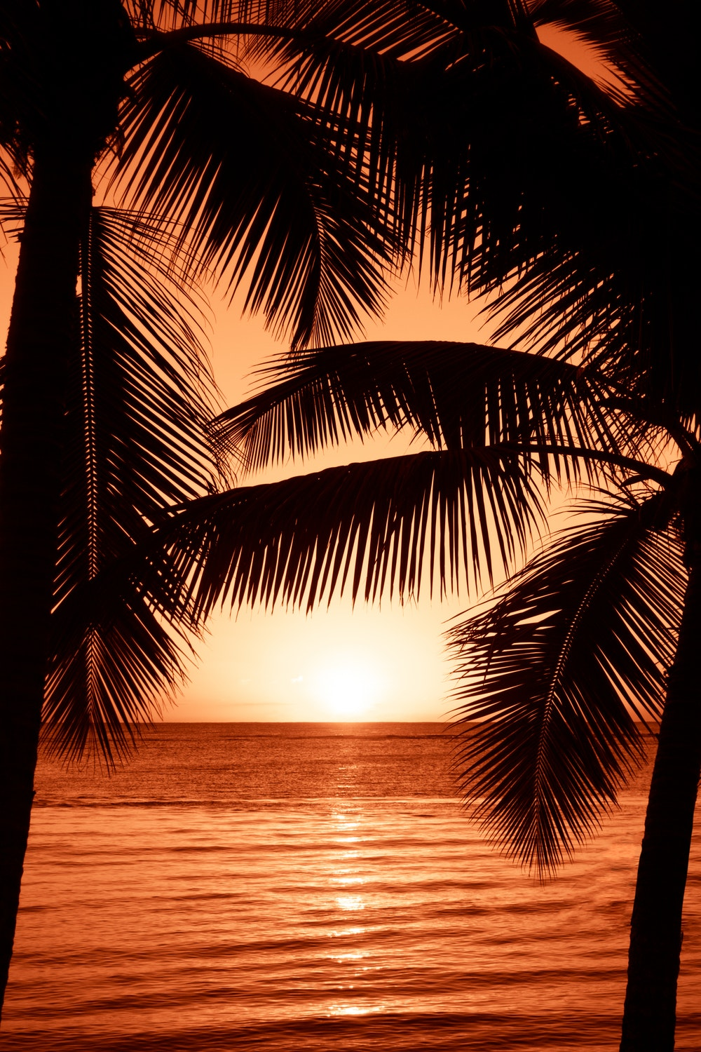 Free Wallpaper - Sunset With Palm Trees Painting , HD Wallpaper & Backgrounds