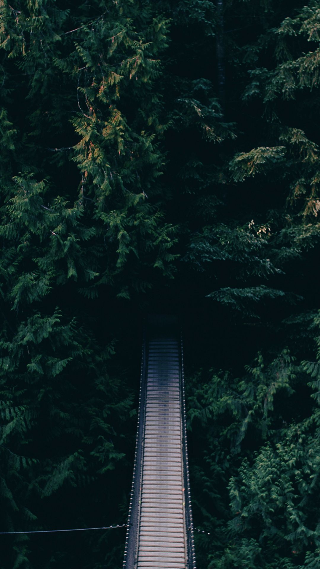 Dense Green Forest Bridge Android Wallpaper - Motivation Best Wallpaper Quotes , HD Wallpaper & Backgrounds