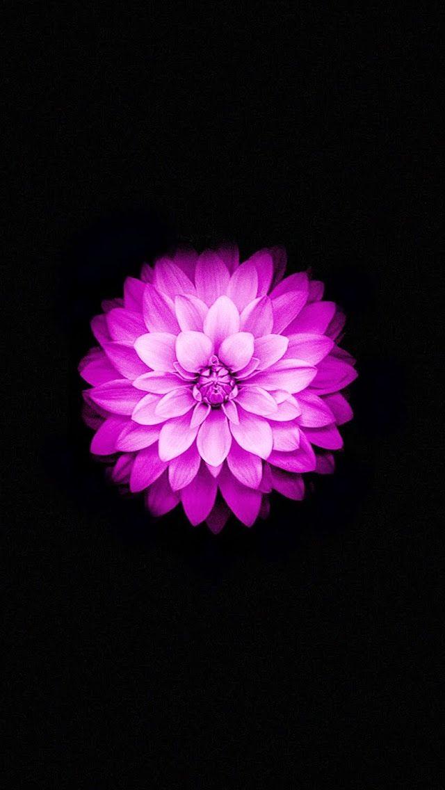 Flower Lock Screen Wallpaper - Lock Screen Iphone 6 Wallpaper Alone , HD Wallpaper & Backgrounds