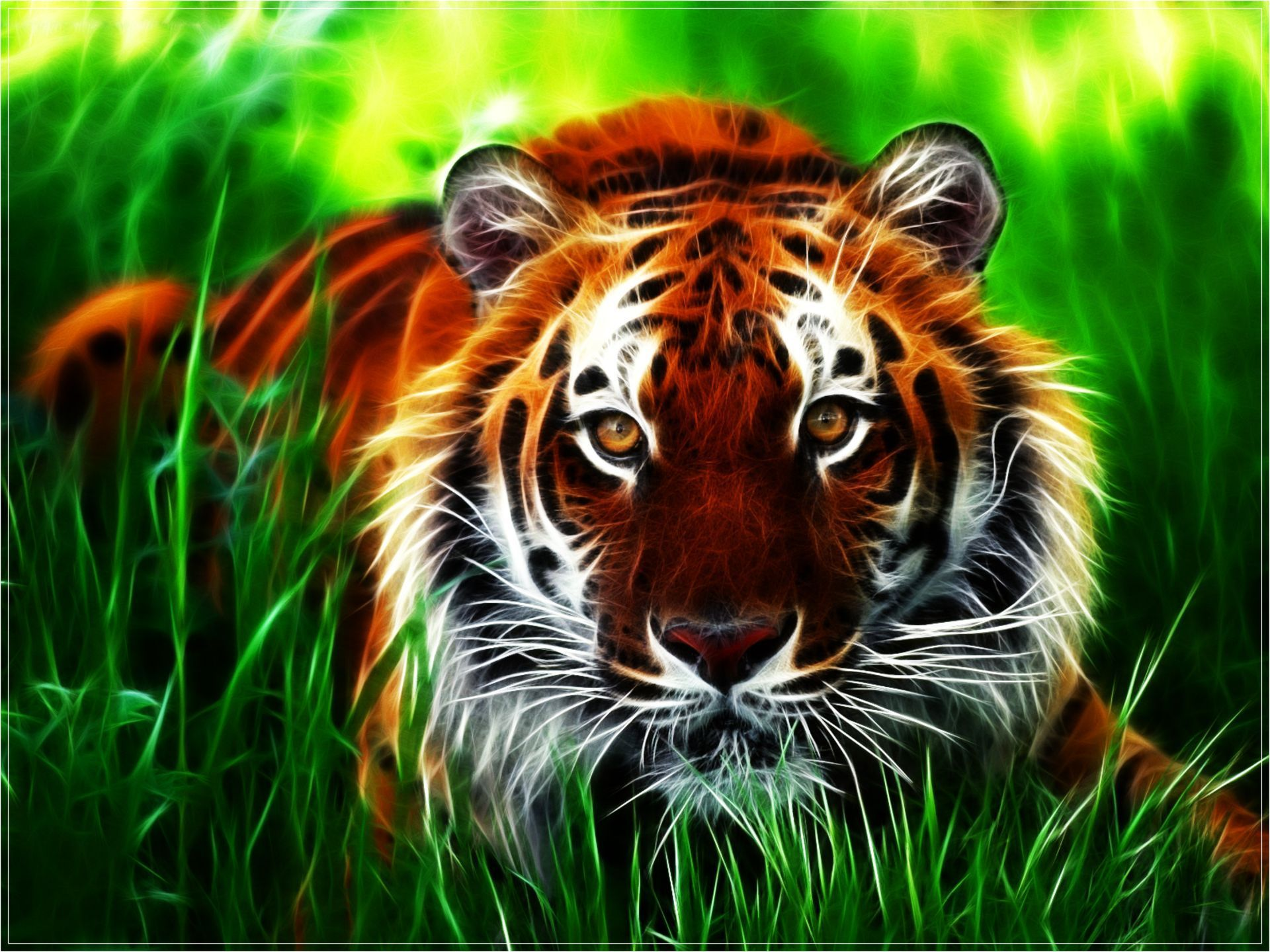 3d Tiger Hd Wallpaper Animated Mobile Wallpapers Hd 3366