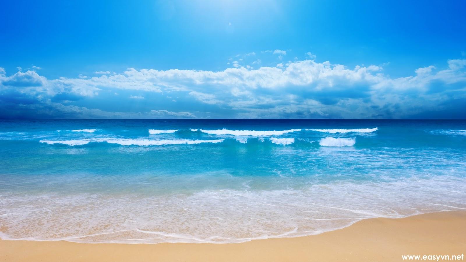 Enjoy The Magic Of Wonderful Sea Creatures Form The - Sea Beach , HD Wallpaper & Backgrounds