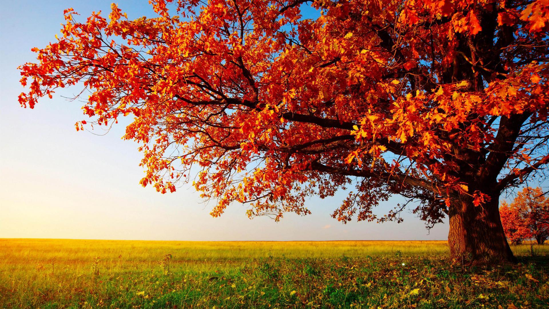 Nature Free Desktop Wallpapers Obtain 4432 Hd Wallpaper Backgrounds Download