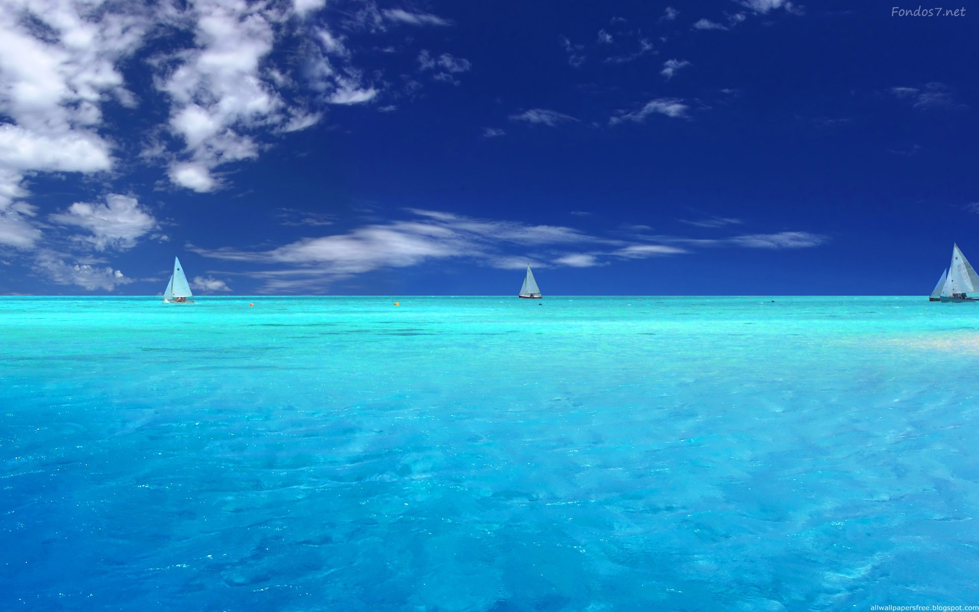 Enjoy The Magic Of Wonderful Sea Creatures Form The - Ocean Background , HD Wallpaper & Backgrounds