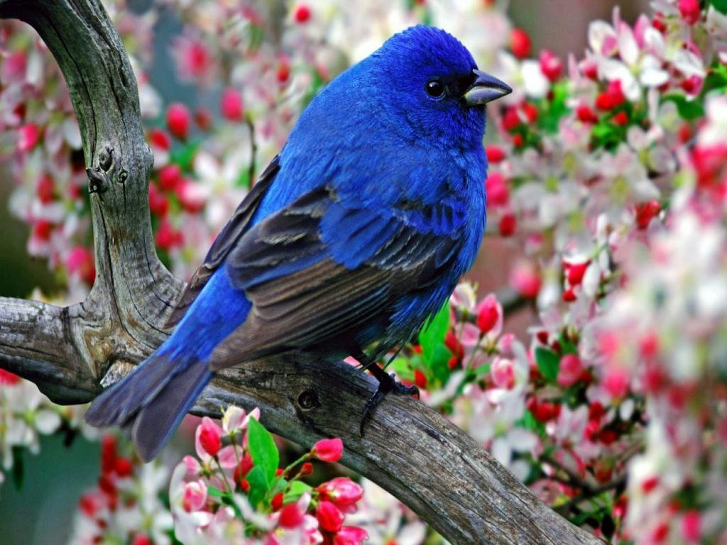 Beautiful Hd Birds Wallpapers Download Beautiful Wallpaper