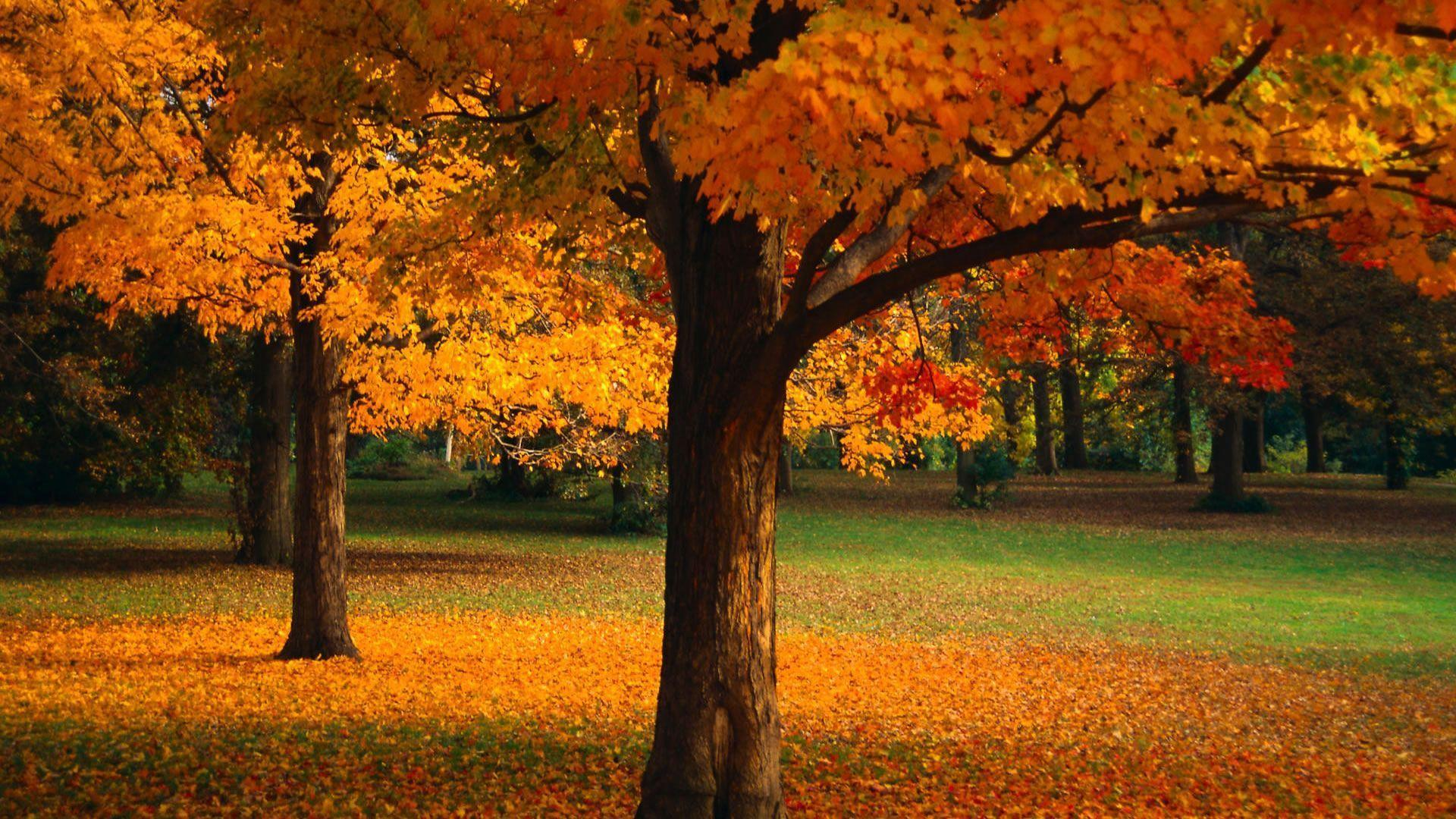 Beautiful Wallpapers Of Trees - Beautiful Trees Images Hd , HD Wallpaper & Backgrounds