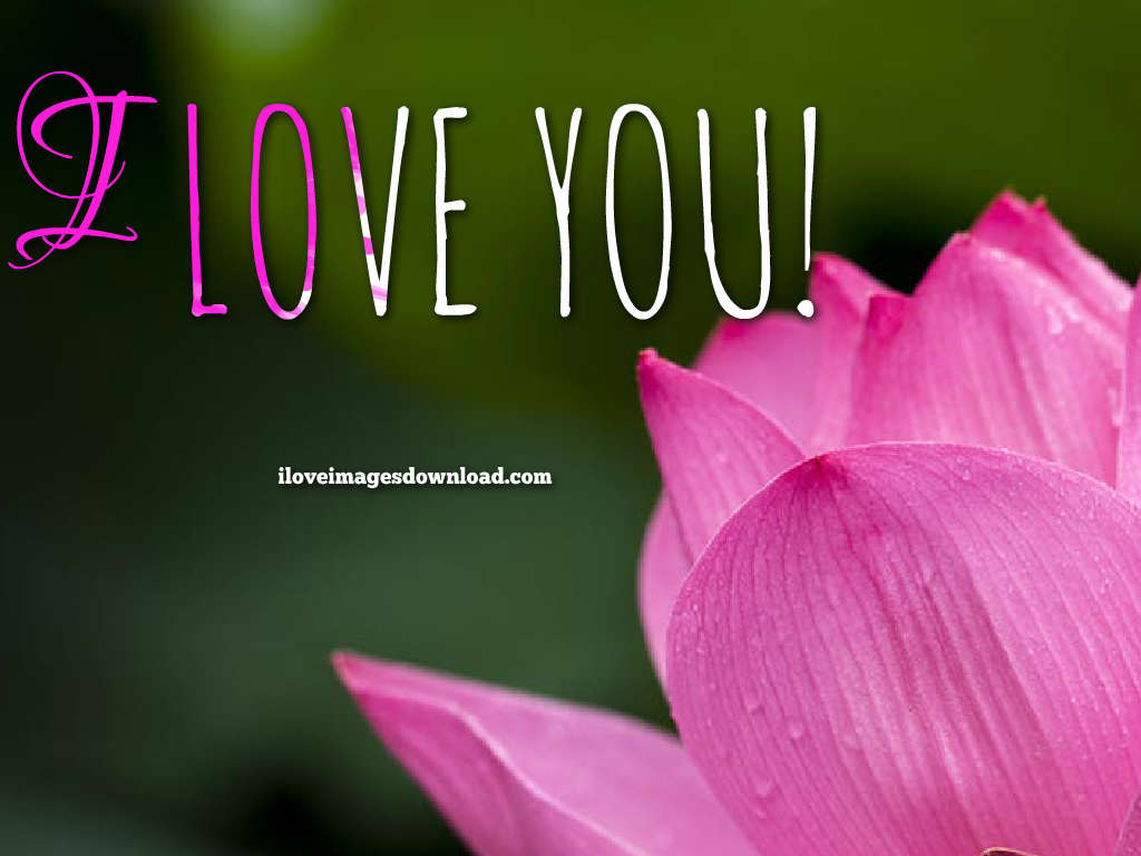 I Love You Wallpapers Free Download - Beautiful Good Morning Flowers , HD Wallpaper & Backgrounds