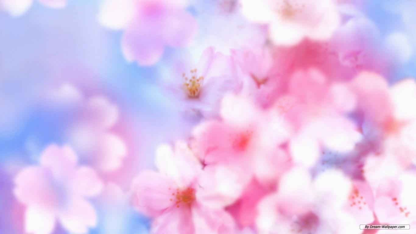 Free Flower Wallpaper - Free Flower Wallpaper Background , HD Wallpaper & Backgrounds