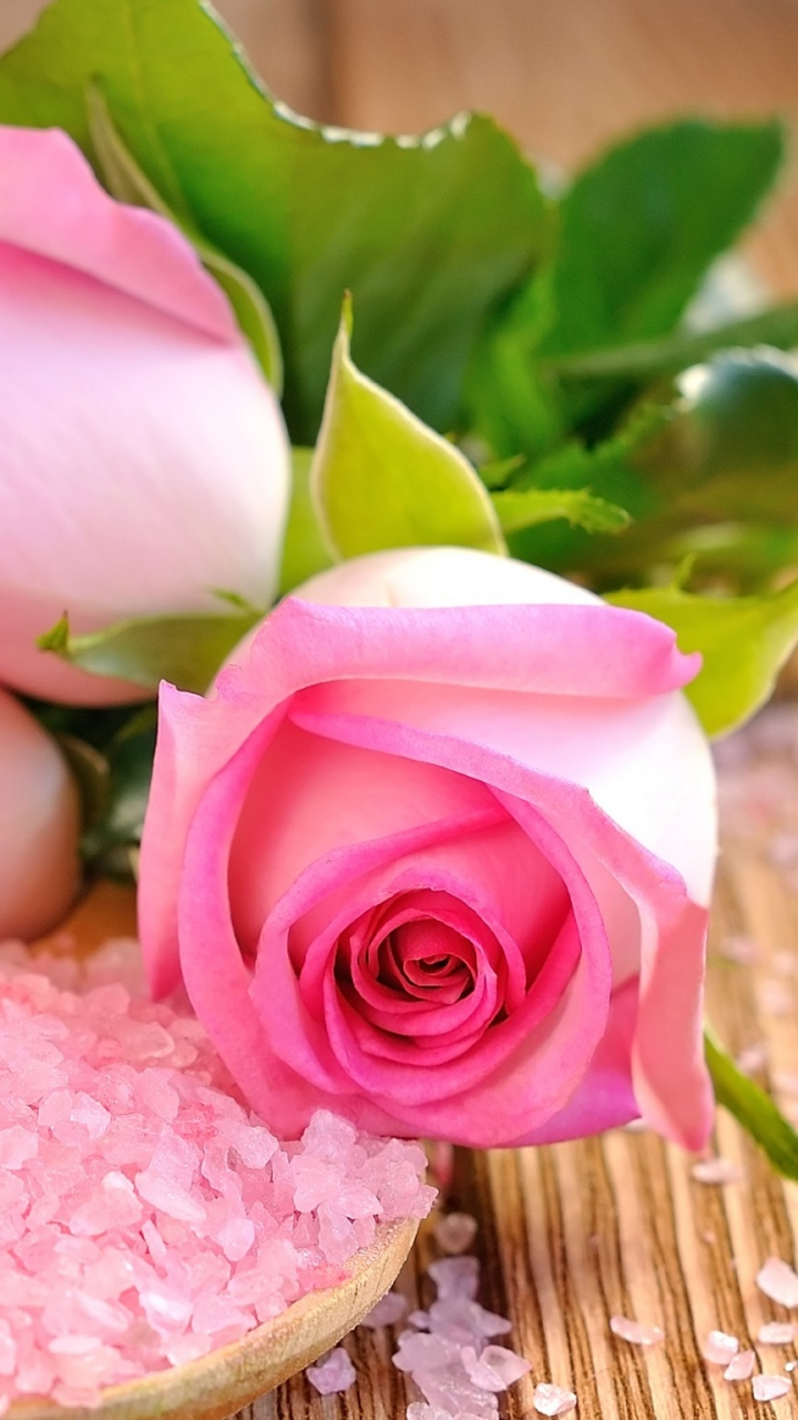 Rose Wallpaper For Iphone 6 , HD Wallpaper & Backgrounds