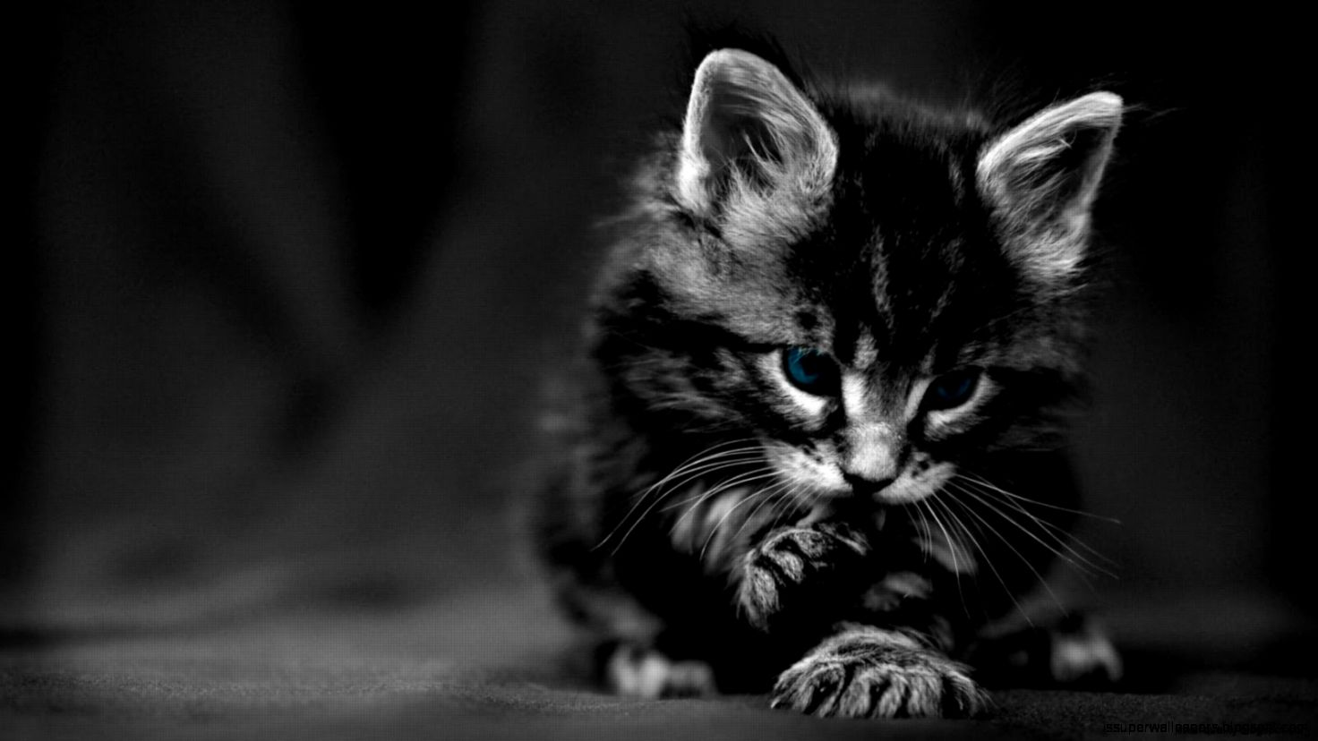 1080p Black And White Wallpaper Hd Black And White Black Kitten