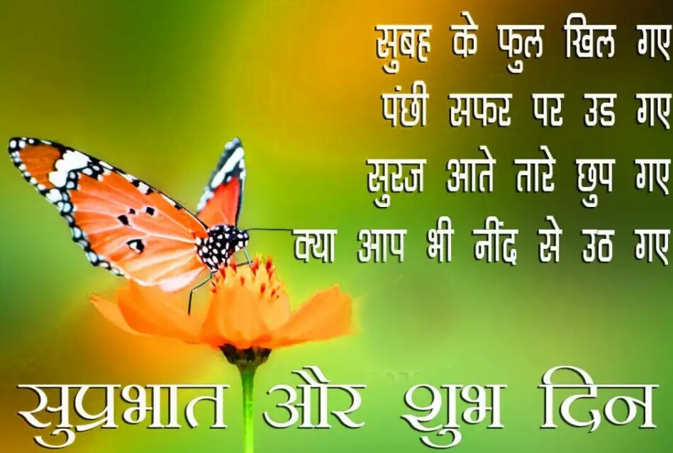 Suprabhat Wallpaper In Hindi - Brush-footed Butterfly , HD Wallpaper & Backgrounds