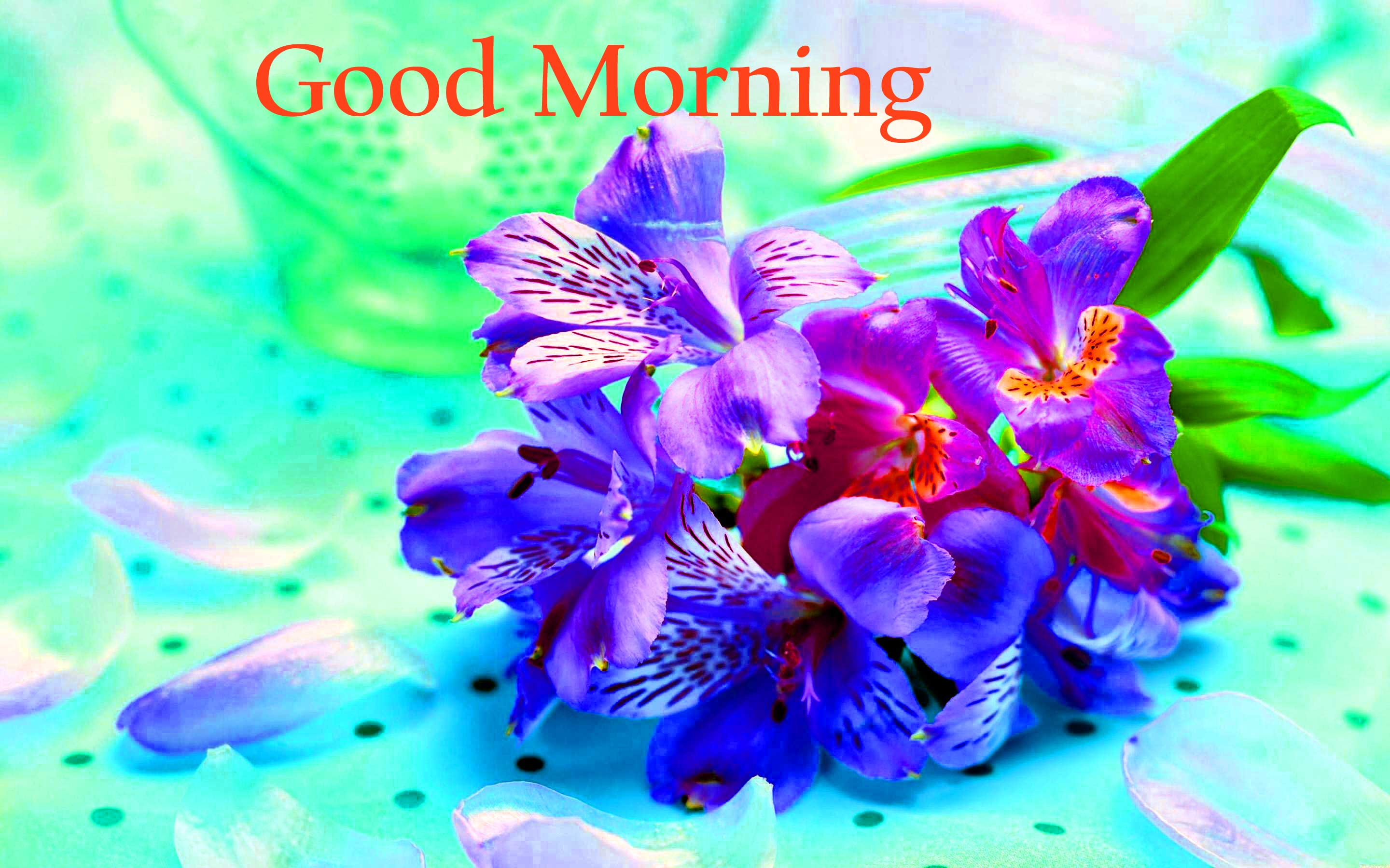 Good Morning Flowers Images Wallpaper Pics Download - Flower Good Morning Love Pictures For Whatsapp , HD Wallpaper & Backgrounds