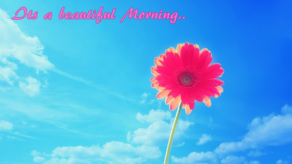 Hd Pink Flower And Blue Sky Good Morning Wish Wallpaper - Desktop Wallpaper Summer Background , HD Wallpaper & Backgrounds