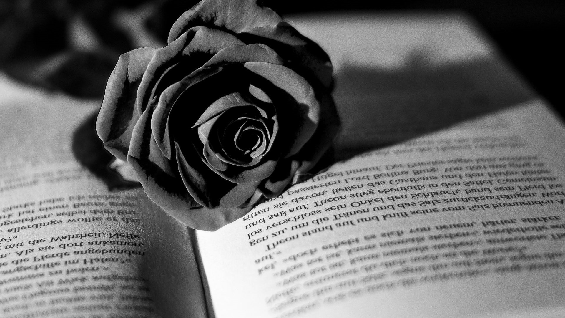 Flowers White Book Black Rose Flower Wallpaper Hd Full Floribunda 100127 Hd Wallpaper Backgrounds Download