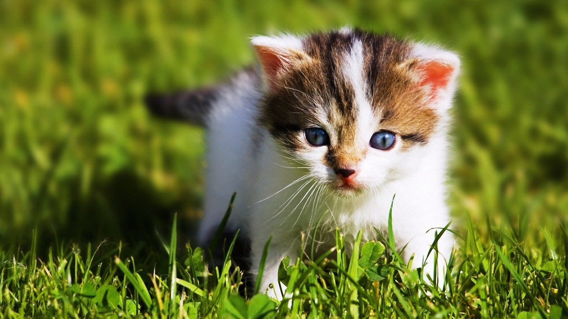 Cute Baby Cats Wallpaper Desktop Baby Animal Wallpapers Hd
