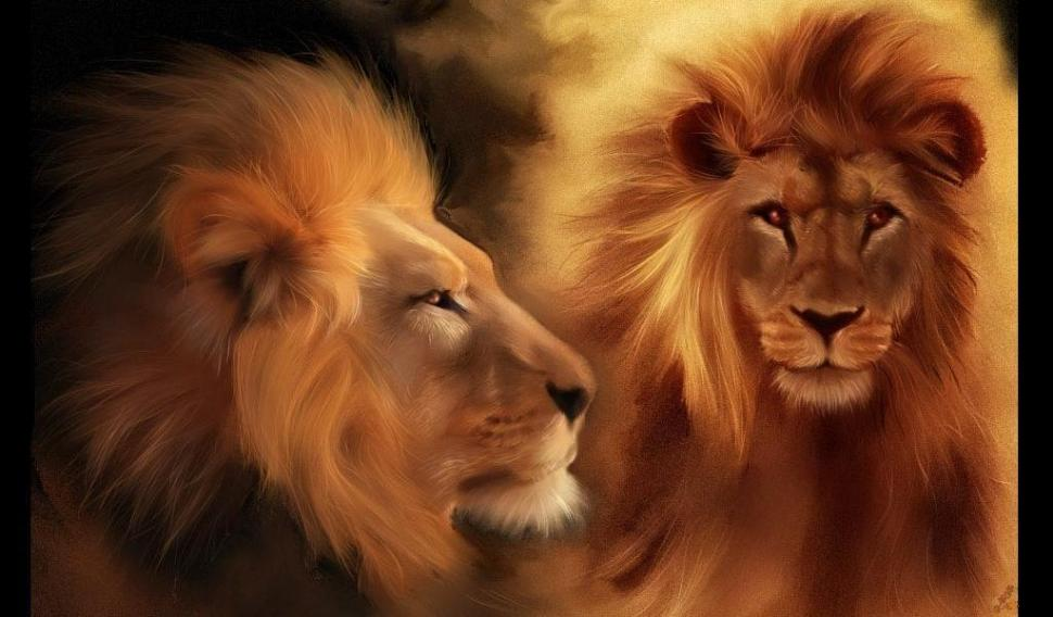 Lions Animals Beautiful Couple Eyes Head Lion Hd Wallpaper - Roaring Lion Of Judah , HD Wallpaper & Backgrounds