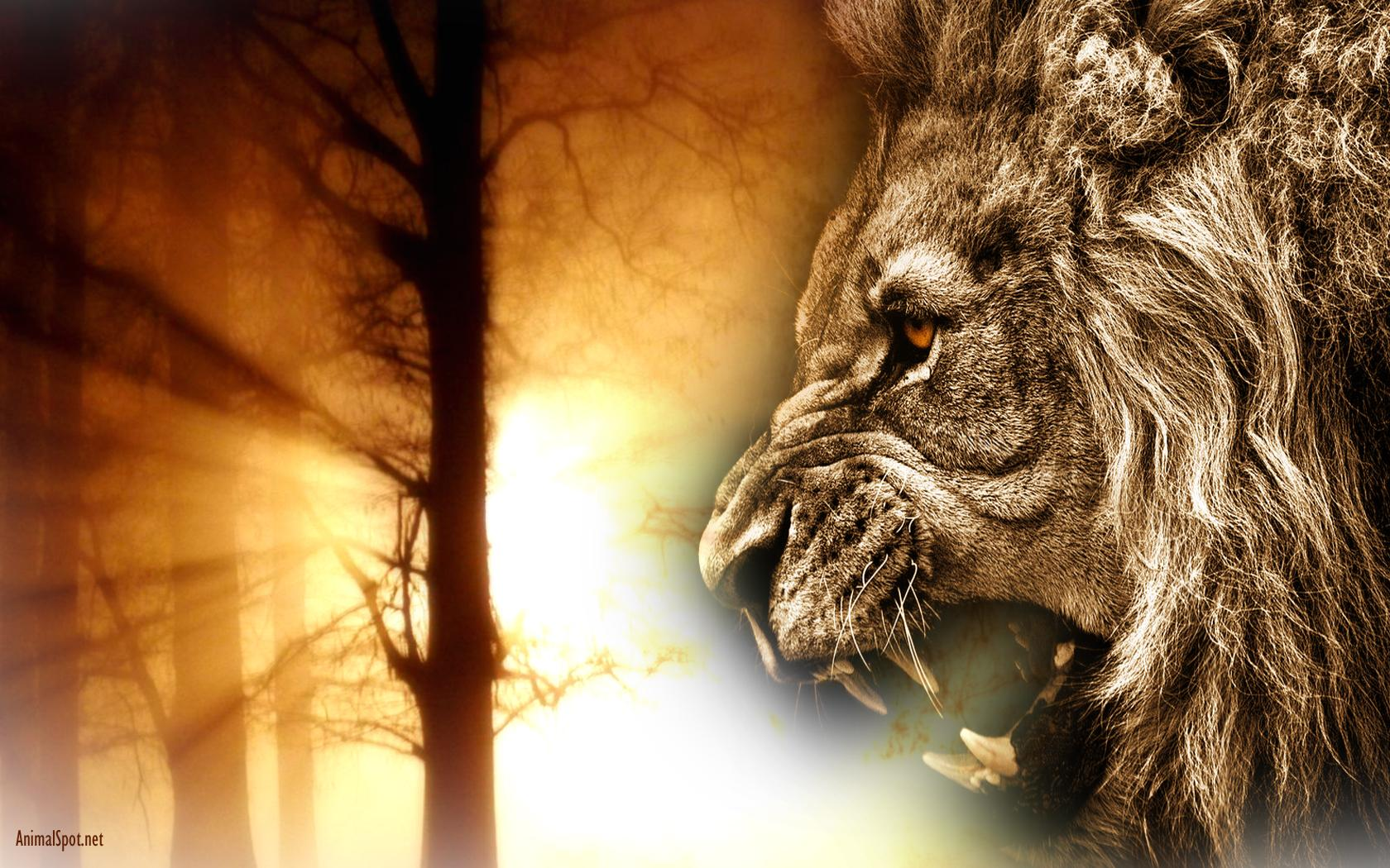 Angry Lion Hd Wallpaper - Angry Lion Wallpaper Full Hd , HD Wallpaper & Backgrounds