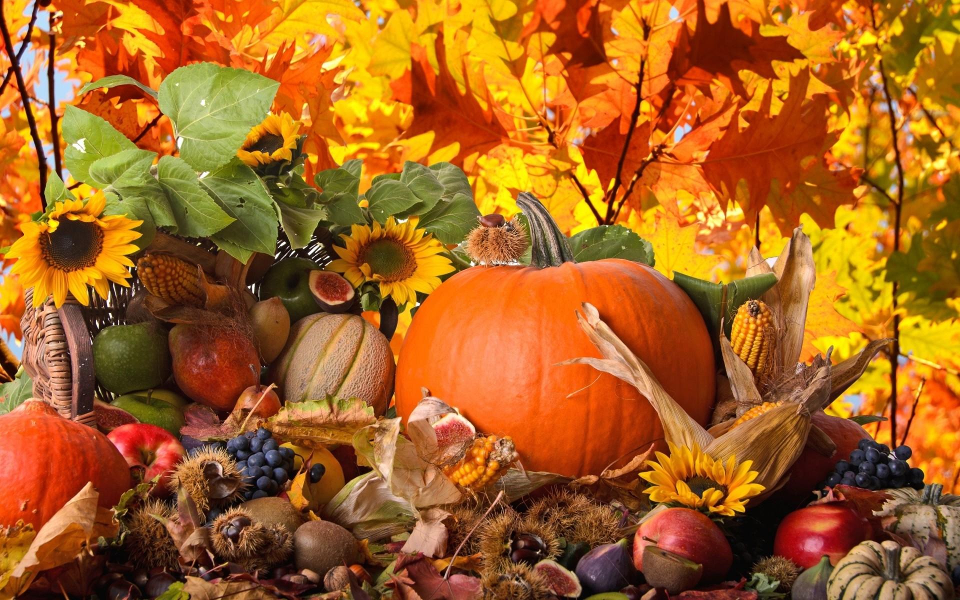 Thanksgiving Wallpapers Mobile - Thanksgiving Desktop Background , HD Wallpaper & Backgrounds