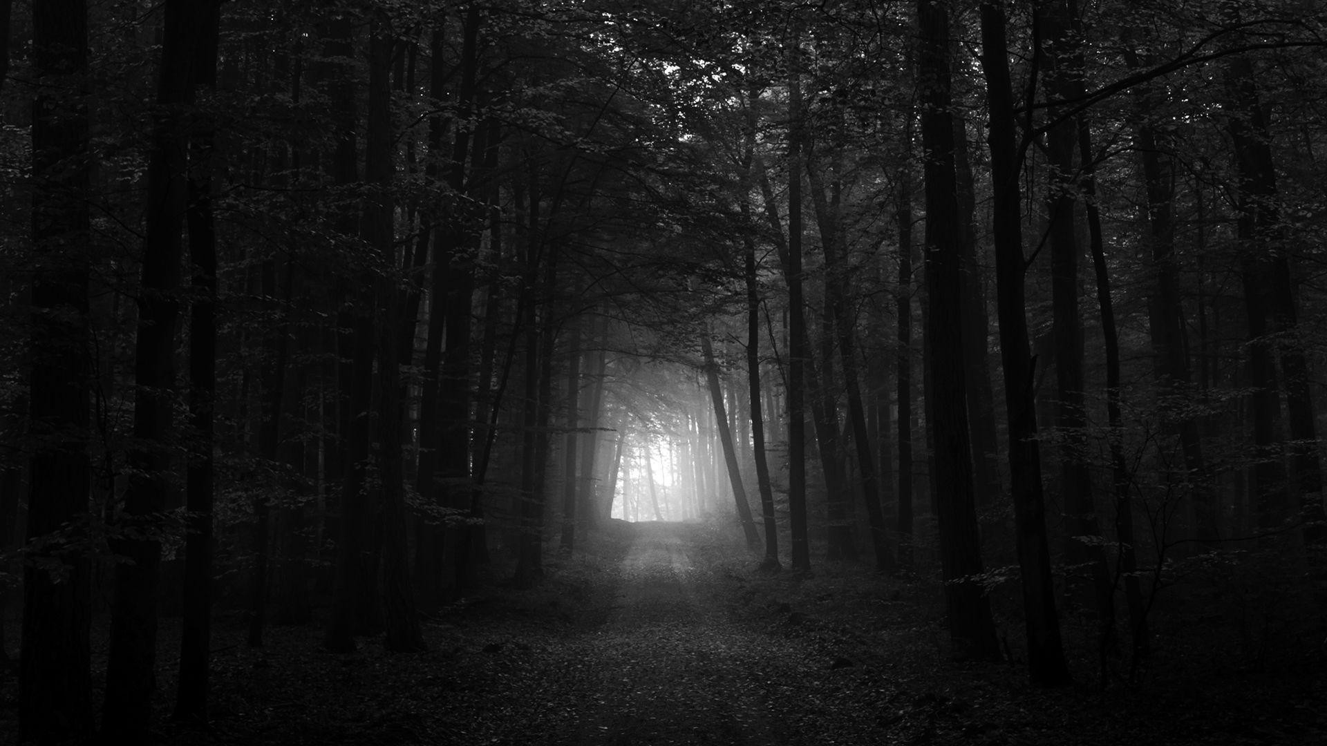 Wallpapers For Dark Forest Iphone Wallpaper Dark Forest