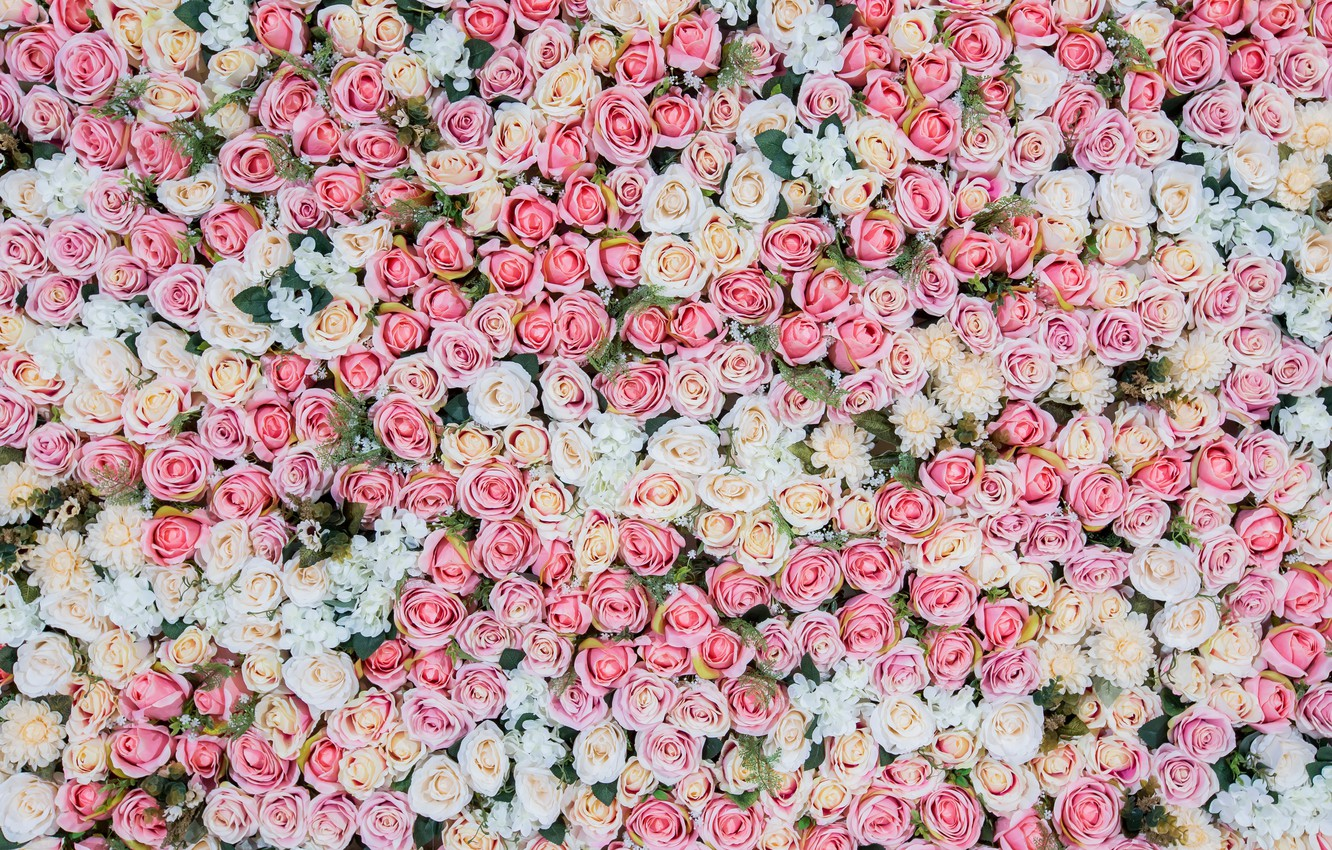Photo Wallpaper Flowers Background Roses Pink Buds Pink And