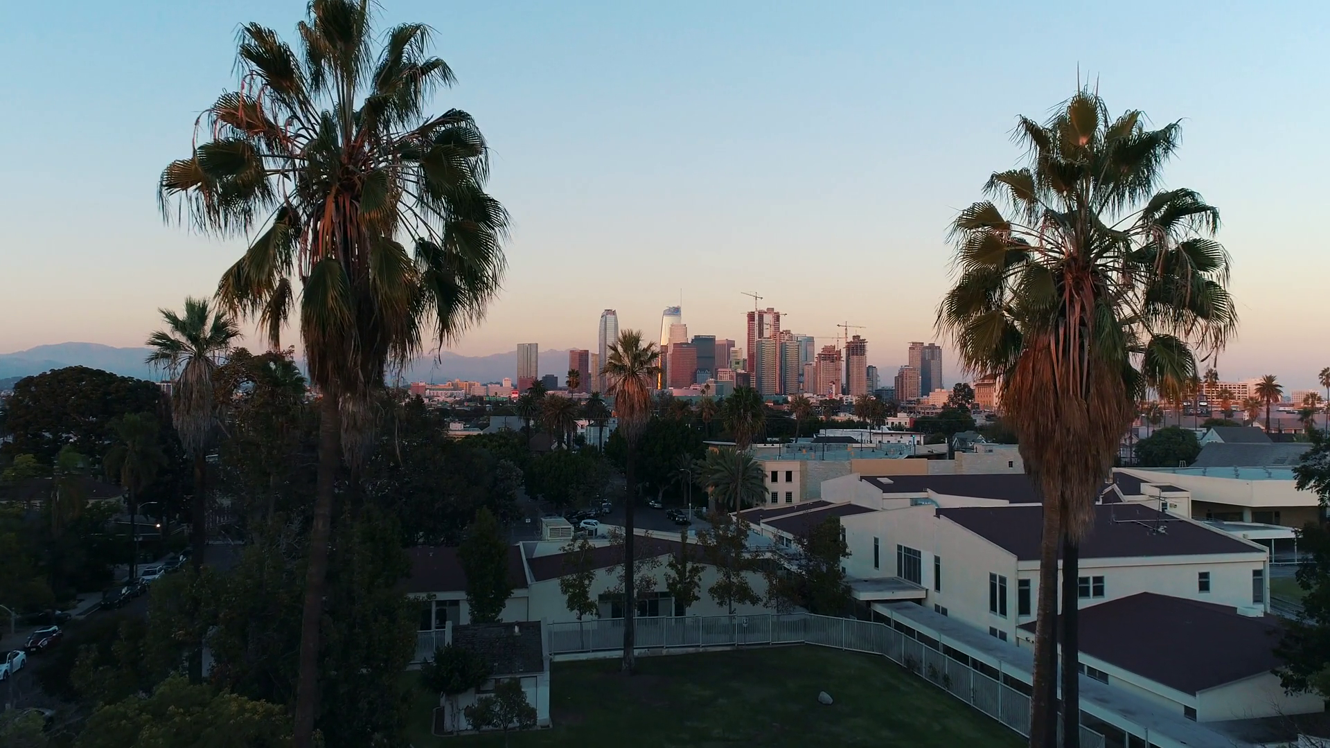 Aerial Los Angeles Palm Trees Flythrough City America - Attalea Speciosa , HD Wallpaper & Backgrounds