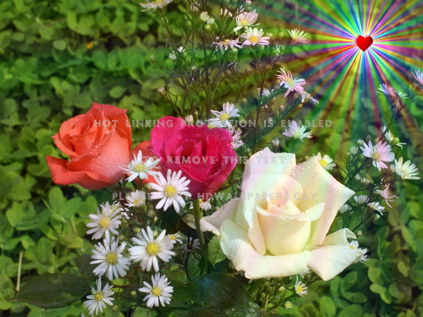 Beautiful Rose Flower Scenery , HD Wallpaper & Backgrounds