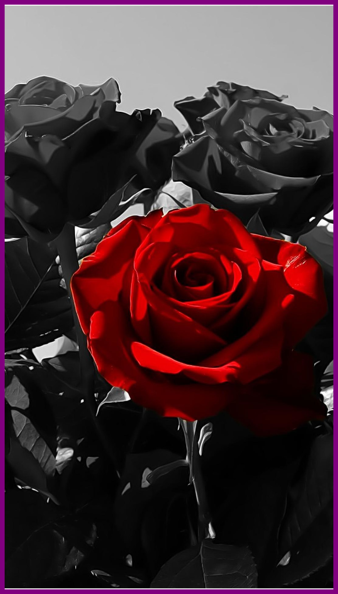 Black Red Rose Black Roses 1019220 Hd Wallpaper