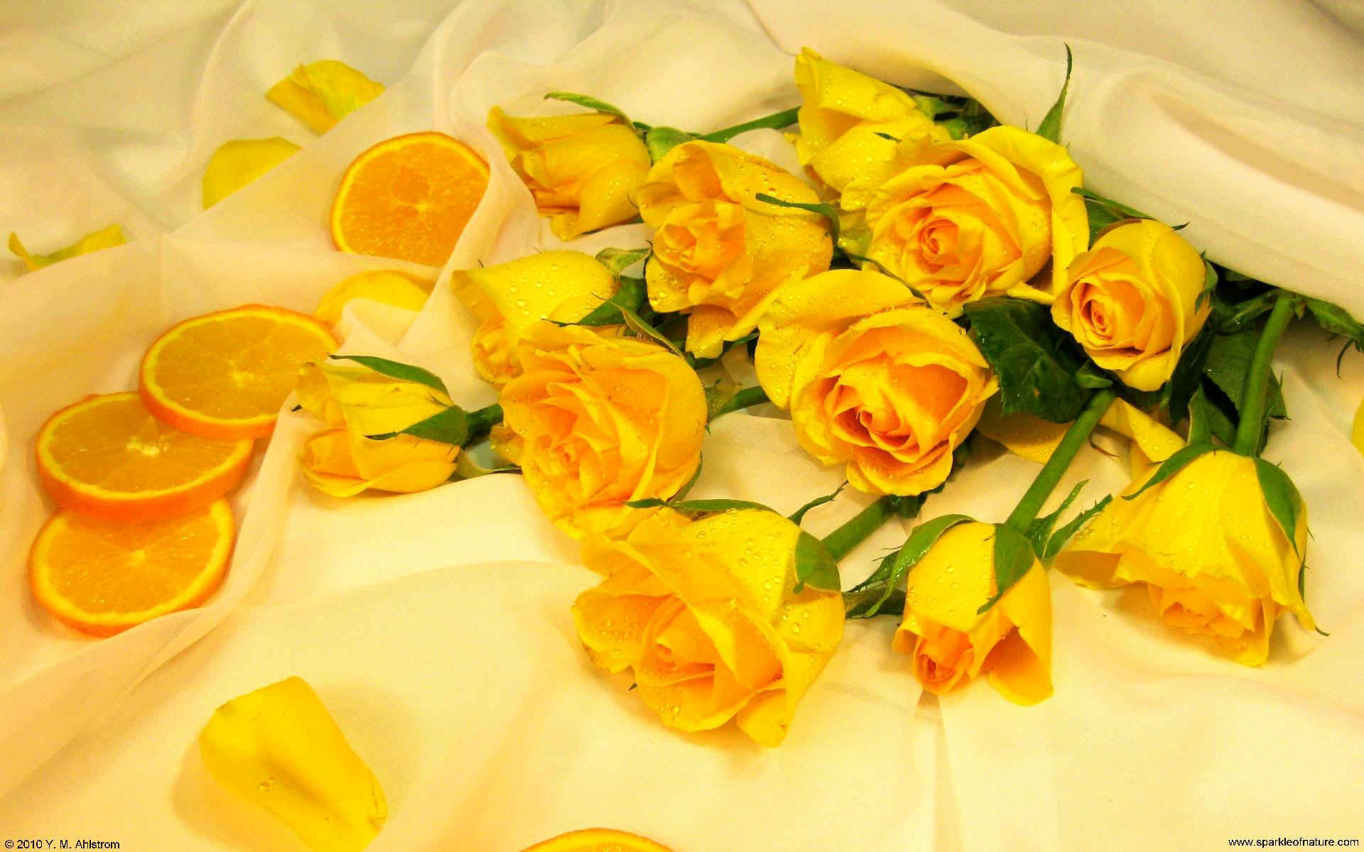 Yellow Roses Hd Wallpaper Yellow Aesthetic Desktop Background 1051592 Hd Wallpaper Backgrounds Download