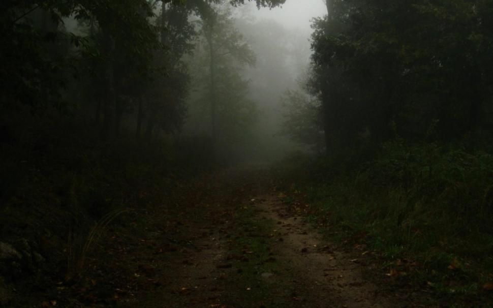 Calm Dark Forest Hd Wallpaper - Tree , HD Wallpaper & Backgrounds